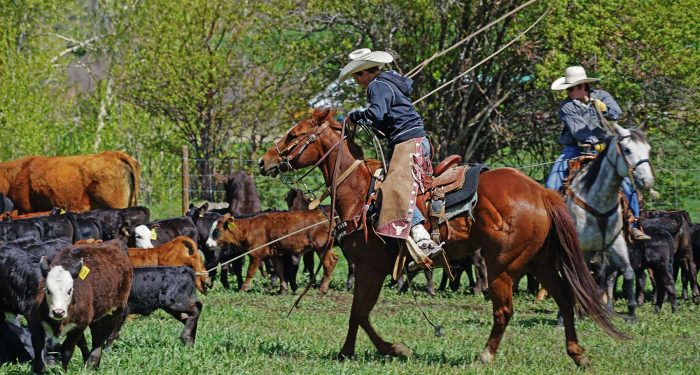Spring Branding at Colorado Ranch for Sale