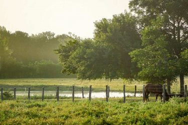 Texas Ranches for Sale - Hall and Hall